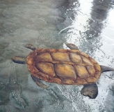 turtle-opted